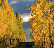 fall-yellow-trees.jpg